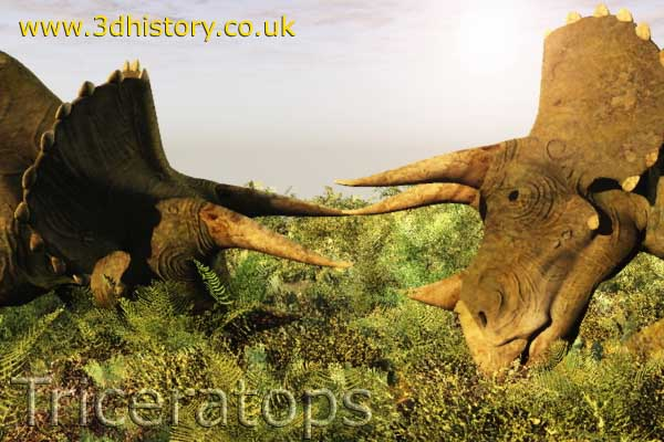 Triceratops - A Ceratopsian from the Cretaceous Period